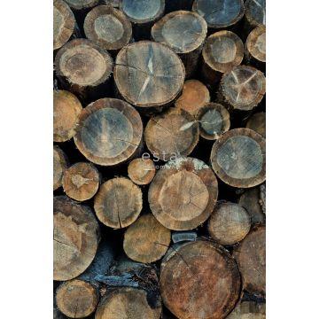 fotomurale tronchetti di legno marrone da ESTA home