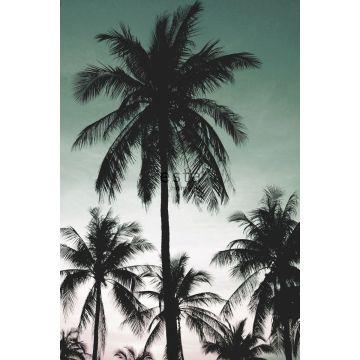 fotomurale palme verde petrolio da ESTA home