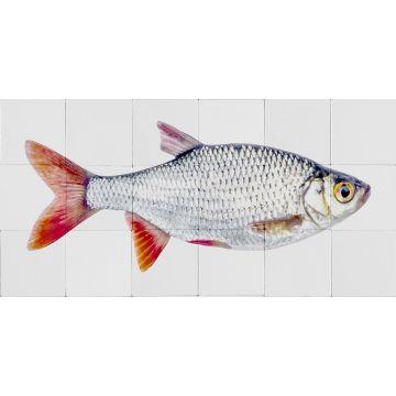 adesivo da parete pesce grigio e rosso da ESTA home